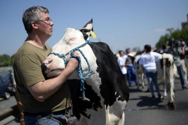 Những người nông dân đã dẫn theo đàn bò để biểu tình trước cửa nghị viện Hungary