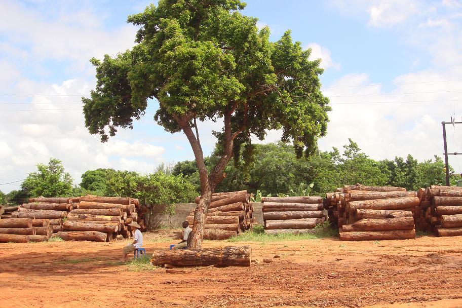 gỗ giang huong