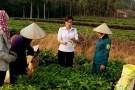 Nghệ An: Rà soát, phát hiện thừa 179 Phó Chủ tịch xã, phường