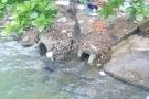 Công ty HaBaDa xả thải vượt phép gần 5 lần gây ô nhiễm sông Thương