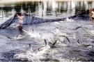 Tổng cục Thủy sản: Làm giả công văn, cấp chứng nhận trái phép hơn 800 sản phẩm