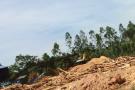 Xưởng gỗ dăm trái phép thách thức cả tỉnh Thanh Hóa