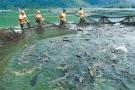 Kiểm tra thông tin 'kiểm định khống' hơn 800 sản phẩm thức ăn thủy sản