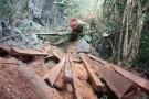 Phó Thủ tướng chỉ đạo xử lý dứt điểm vụ lâm tặc phá rừng nghiến cổ thụ
