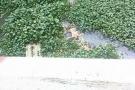 Phát hiện xác thanh niên đang phân hủy dưới sông Bắc Hưng Hải