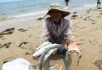 Ứng trước 3.000 tỷ đồng bồi thường cho ngư dân 4 tỉnh miền Trung