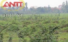 KCN Lương Điền - Cẩm Điền bỏ hoang: Không tiết lộ vụ chuyển nhượng dự án 1.200 tỷ