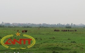 """Khu công nghiệp Cẩm Điền - Lương Điền: """"Đất vàng"""" hoang hóa, nông dân lao đao"""