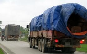 Xe gỗ Lào quá tải trọng ở Nghệ An ngang nhiên hoạt động