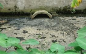 Tiếp tục phát hiện nhà máy bia Đông Nam Á xả nước thải ra môi trường