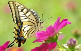 Con bướm xinh