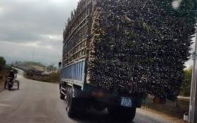 Trưởng Ban quản lý các khu kinh tế tỉnh Gia Lai bị phê bình