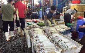 Nghiêm cấm sử dụng, kinh doanh, tiêu thụ thủy, hải sản chết bất thường