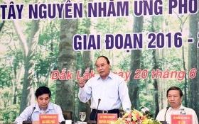 Thủ tướng chỉ đạo xử lý nghiêm các hành vi bao che, dung túng hành vi phá rừng