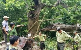 """Đà Nẵng:""""Tình ngay lý gian"""" cho việc dọn vệ sinh rừng ở bán đảo Sơn Trà"""