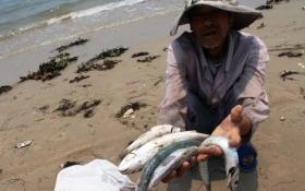 Ngư dân miền Trung nhận bồi thường cao nhất trên 37 triệu đồng/tháng