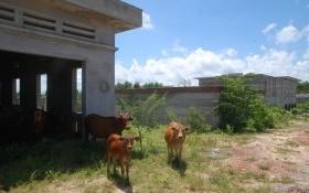Nhà máy nước sạch 30 tỉ bỗng thành ... chuồng nuôi bò