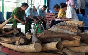 Lại phát hiện hơn 700kg ngà voi nhập lậu