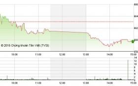 Chứng khoán ngày 12/12: Nhiều blue-chip giảm mạnh đẩy các chỉ số lao dốc