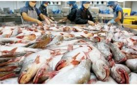 """""""Lật kèo"""" lợi nhuận, thị trường quay mặt với """"vua cá tra"""" Hùng Vương"""
