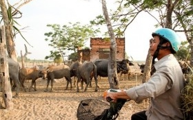 Giá đất Củ Chi bình tĩnh với siêu dự án của 'chúa đảo' Tuần Châu