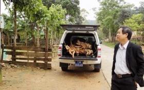 Giám đốc trung tâm y tế huyện dùng xe biển xanh chở gỗ lậu
