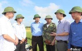 Chủ tịch tỉnh Hà Tĩnh nghi ngờ hơn 9.000 ha lúa bị bệnh do giống kém chất lượng