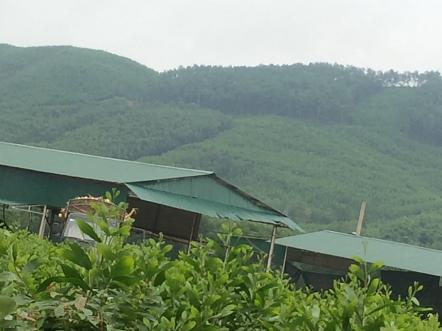 San phẳng đất rừng xây nhà máy gỗ dăm trái phép
